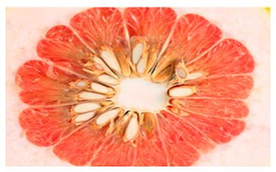 Chrysanthemum core pomelo