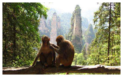 Monkeys in Zhangjiajie